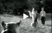 Lassie. Eller nää …