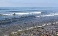 Varning för giftiga alger i Östersjön!