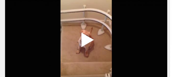 Att glida nerför trappen …
