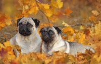 13 anledningar till varför hösten är bästa årstiden när man har hund