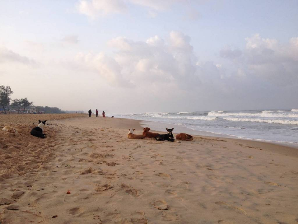 Hundgäng på stranden