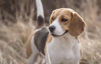 Vett & etikett doggy style, del 1: Att hälsa på hundar …