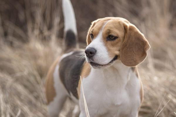 """Vett & etikett doggy style, del 2 Att """"uppföra"""" sig som hundägare …"""