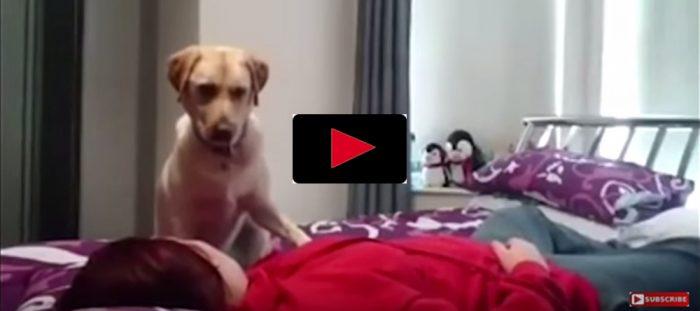 Se hunden rädda sin matte vid epilepsianfall