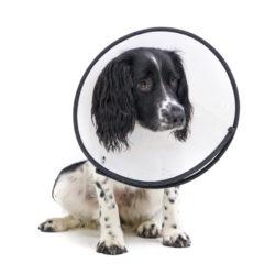 Viktigt att tänka på när du ska försäkra din hund