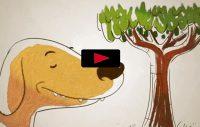 """Så """"ser"""" hunden med nos och luktsinne"""