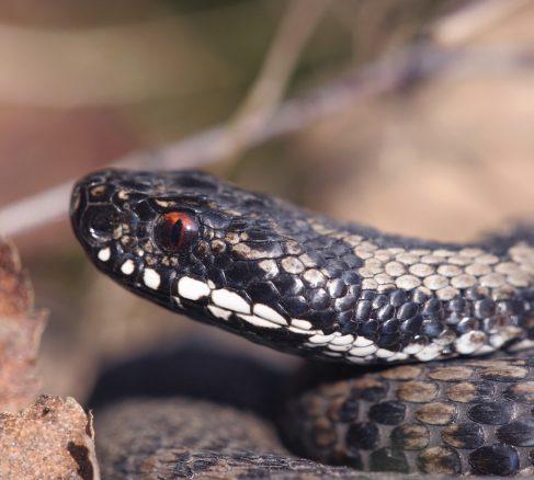 Var förberedd om ormen hugger till