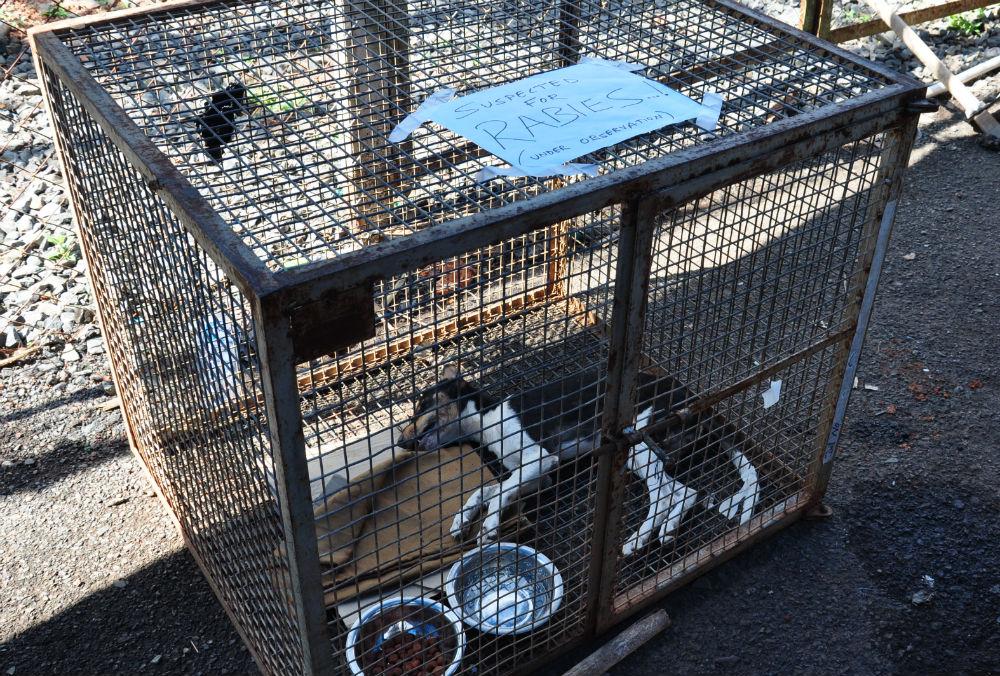 Lilla valpen fick somna in då den var rabiesmittad...