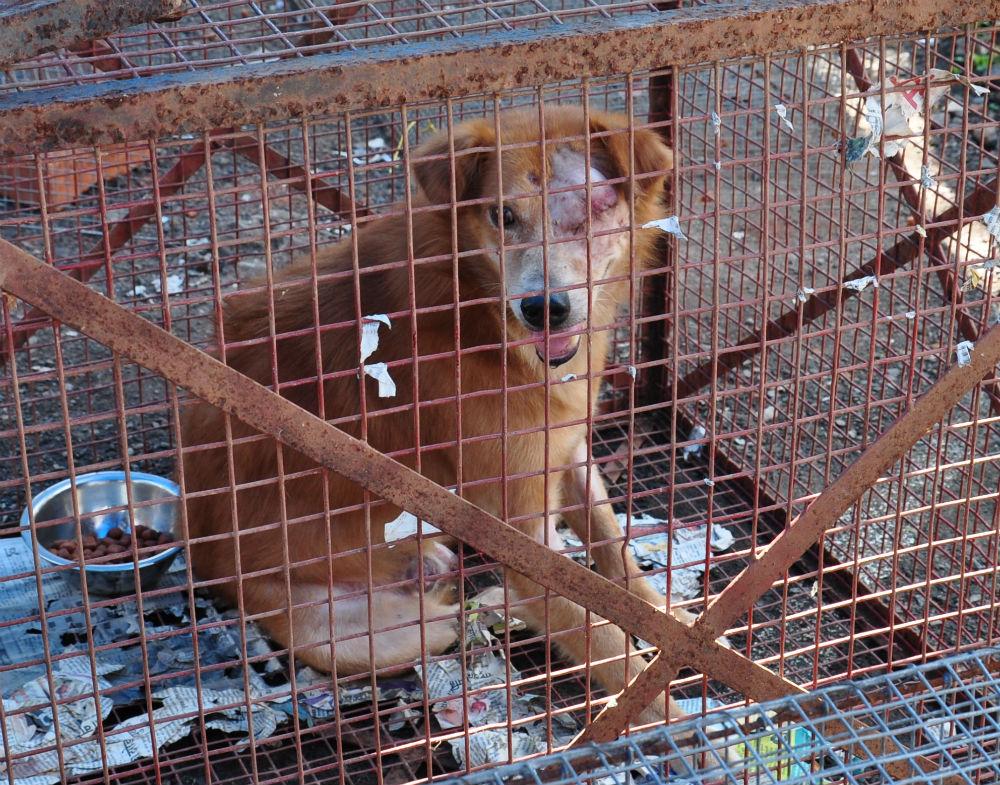 Denna hunden hade fått halva ansiktet avbitet och fick opereras.