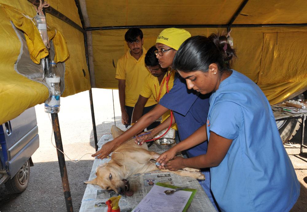 Veterinärerna kollar dropp inför operation.
