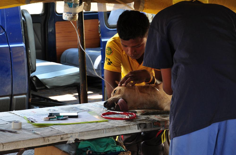 Skönt att se att veterinärerna verkligen bryr sig om hundarna.
