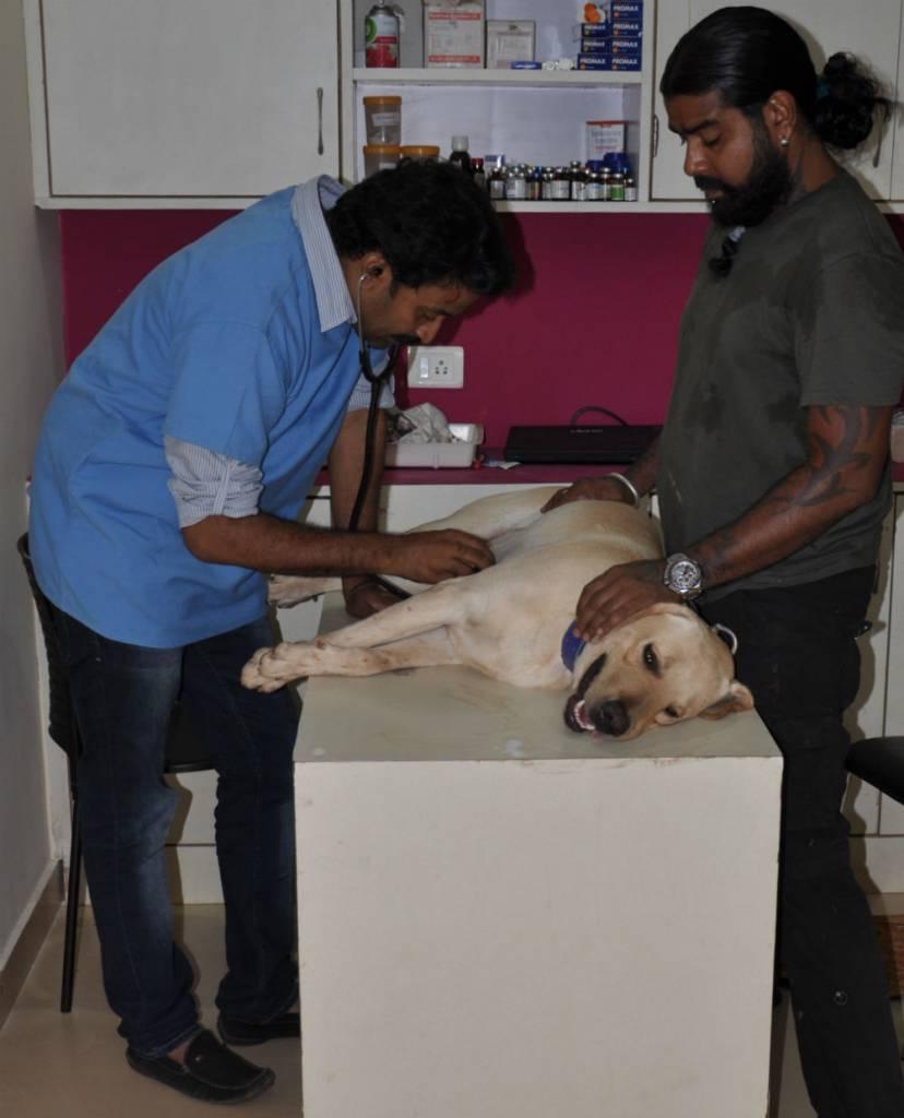 Äntligen kom veterinären...