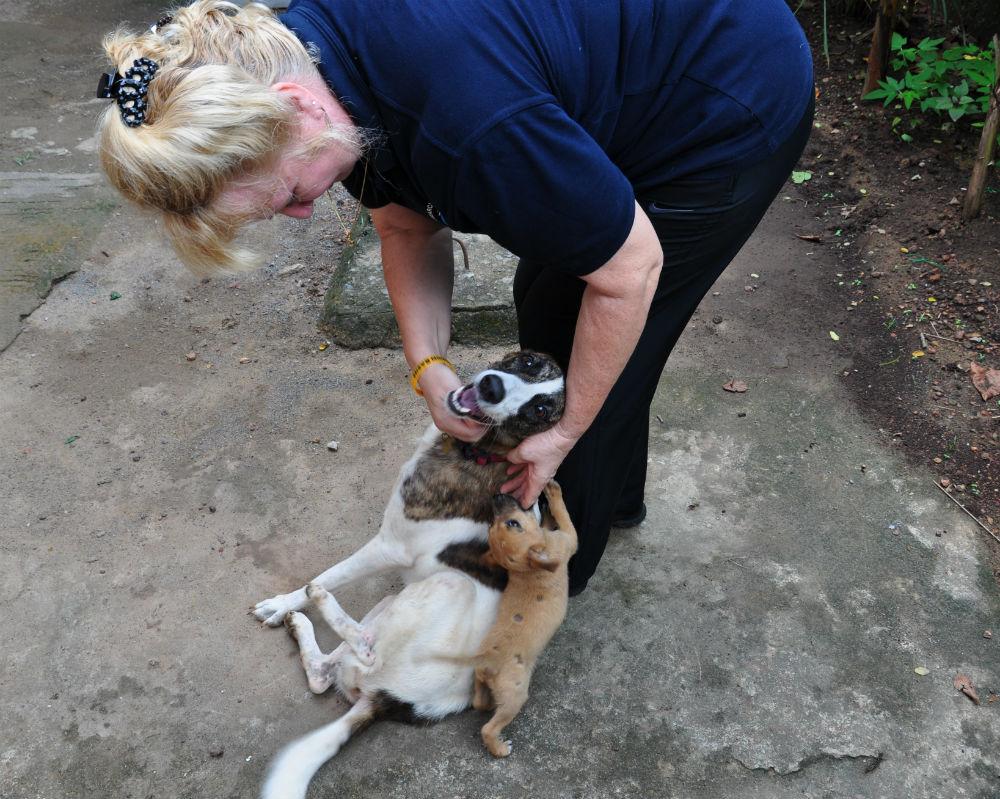 Karen hälsar på en av hundarna hon räddat och som nu bor på kliniken.