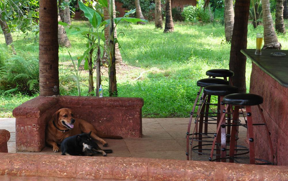 Två av hundarna chillar vid baren.