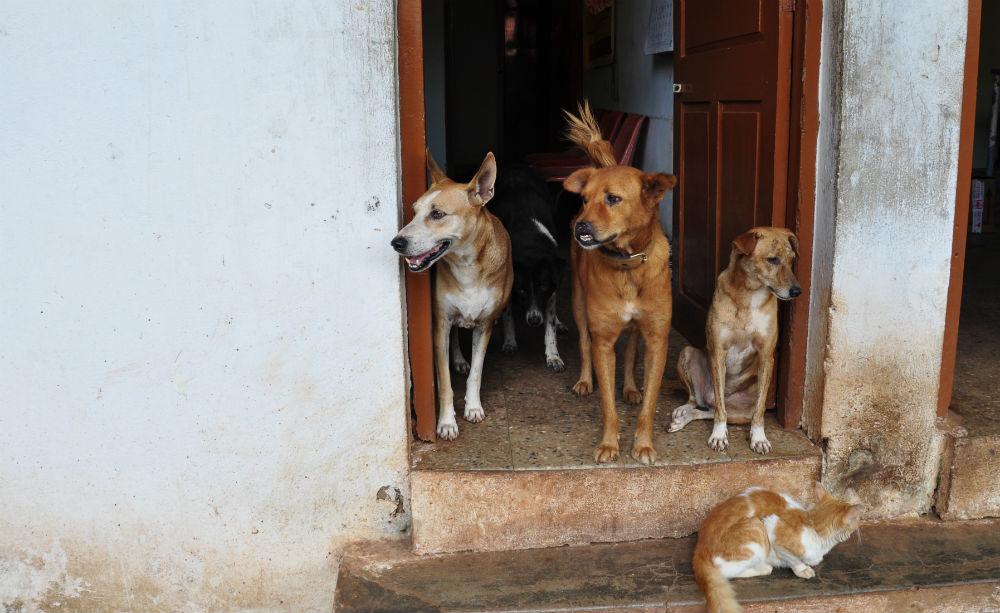 Hundgänget, med katt, som bor lösa på hundhemmet.
