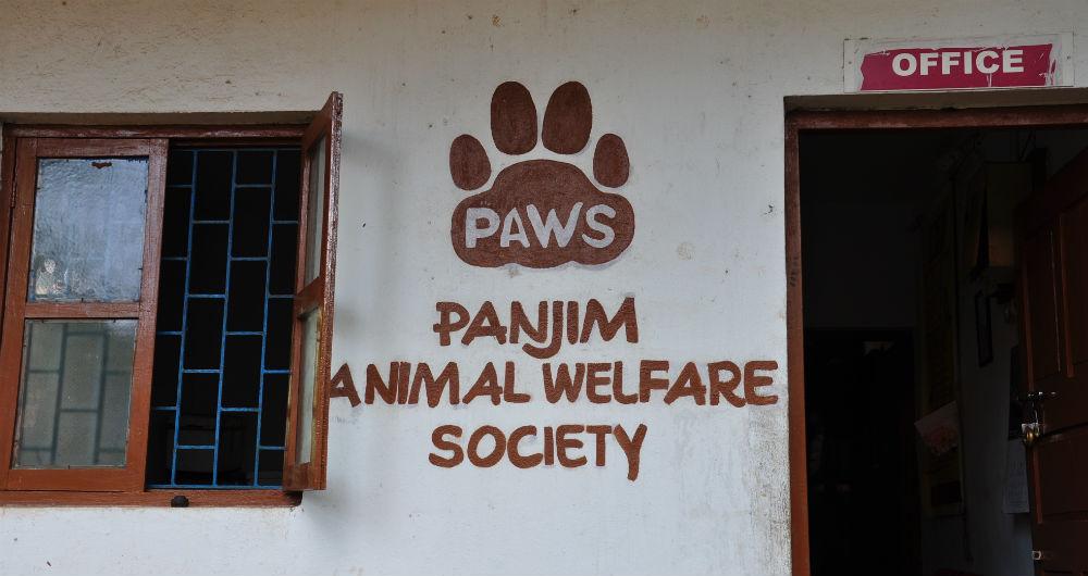 PAWS logga på kontorsväggen.