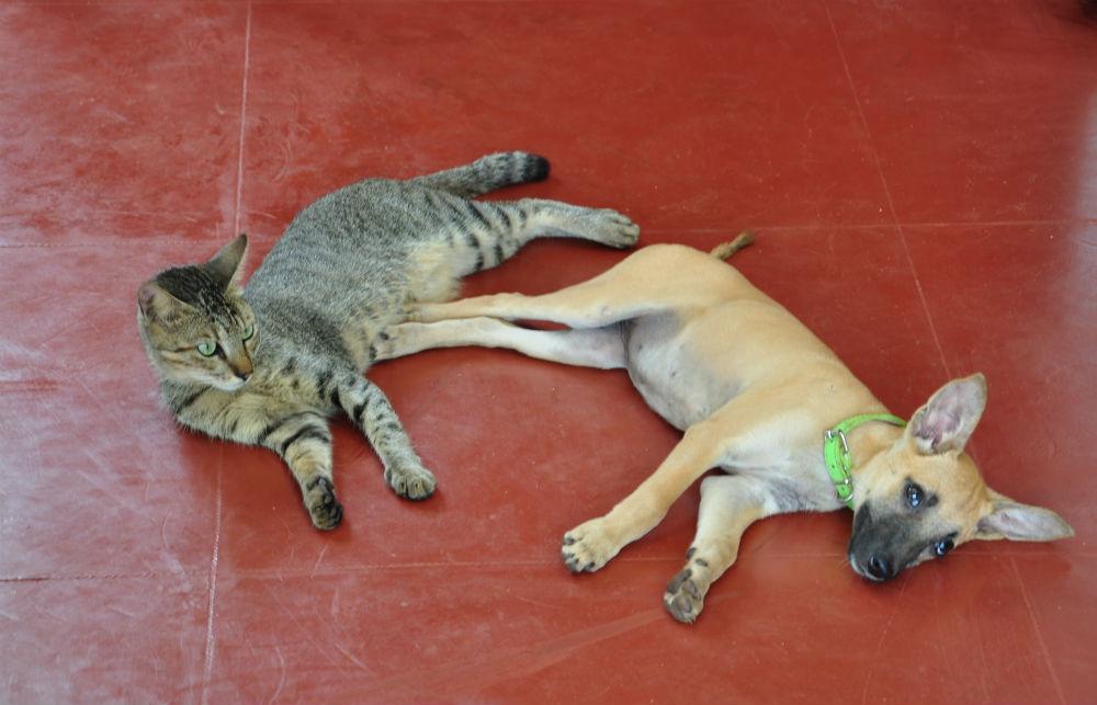 Ibland är det skönt med en tupplur ihop med sin bästa vän.