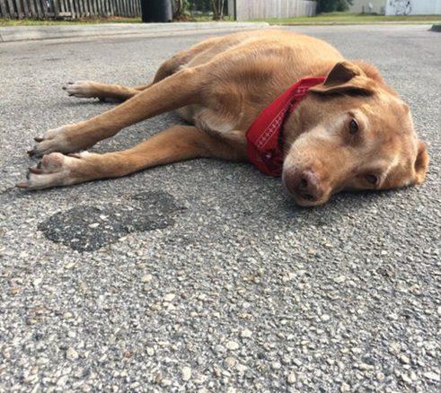 Matte dödades – då vägrade hunden lämna platsen