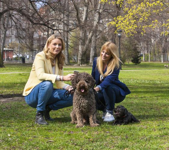 Starta eget i hundbranschen – 5 råd på vägen