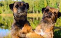 Film: Höstricks med hundar