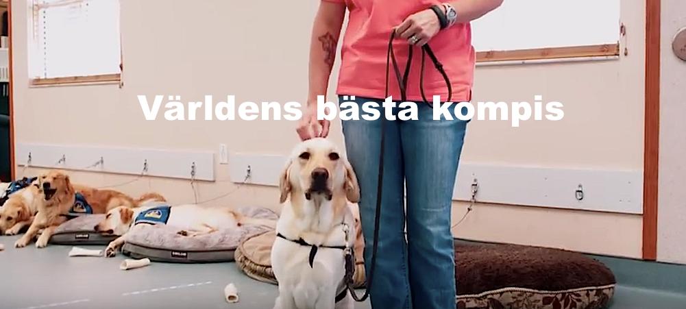 FILM: Servicehunden Barley är Andis stora stöd