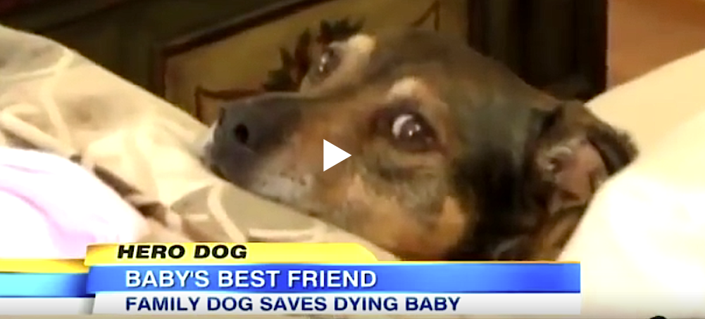 Duke räddade livet på Harper