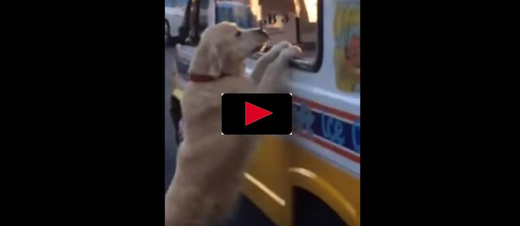 Spana in hunden som köper sin egen glass