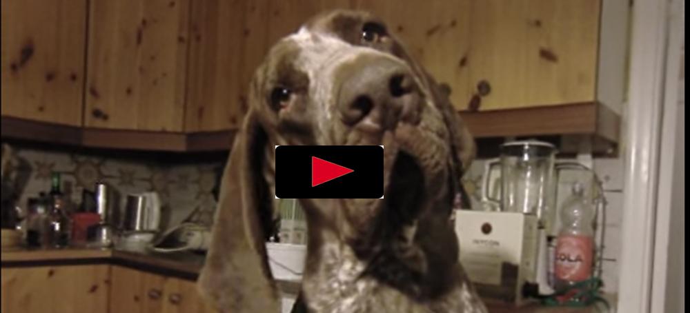 Hunden som diggar glassbilslåten