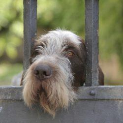 Möt hundpsykologen