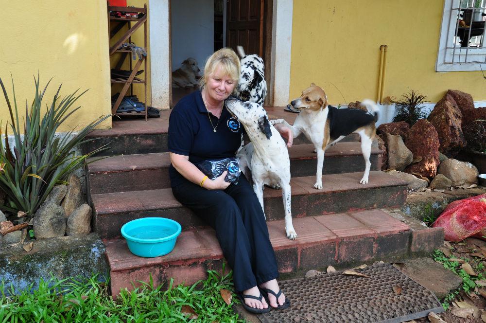 Några av hundarna på WAG bråkar om Karens uppmärksamhet.