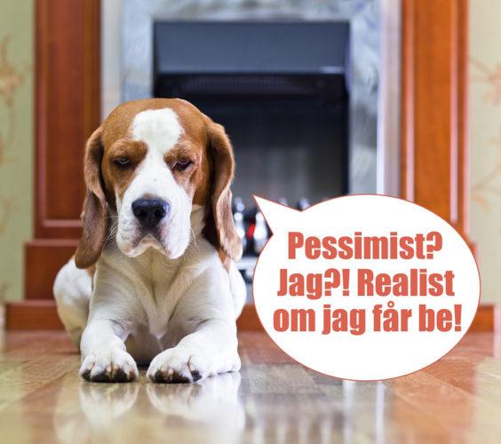 Är din hund en pessimist?
