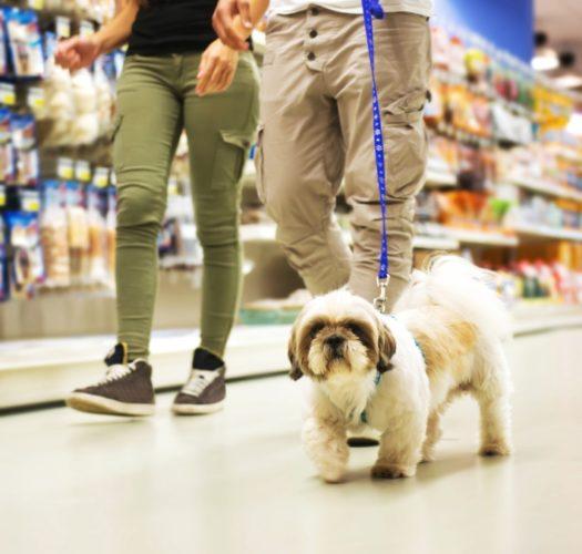 Riksdagsledamot föreslår: Inför receptfria djurläkemedel i zoobutiker