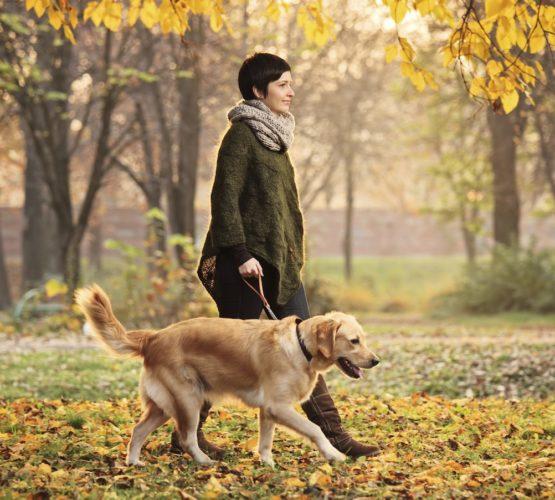 10 skäl att ge din hund ordentliga promenader