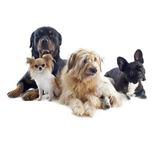 10 annorlunda fakta om hundar