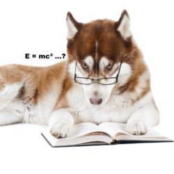 smarthund