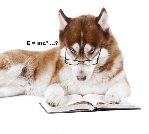 Hur smart är din hund egentligen?