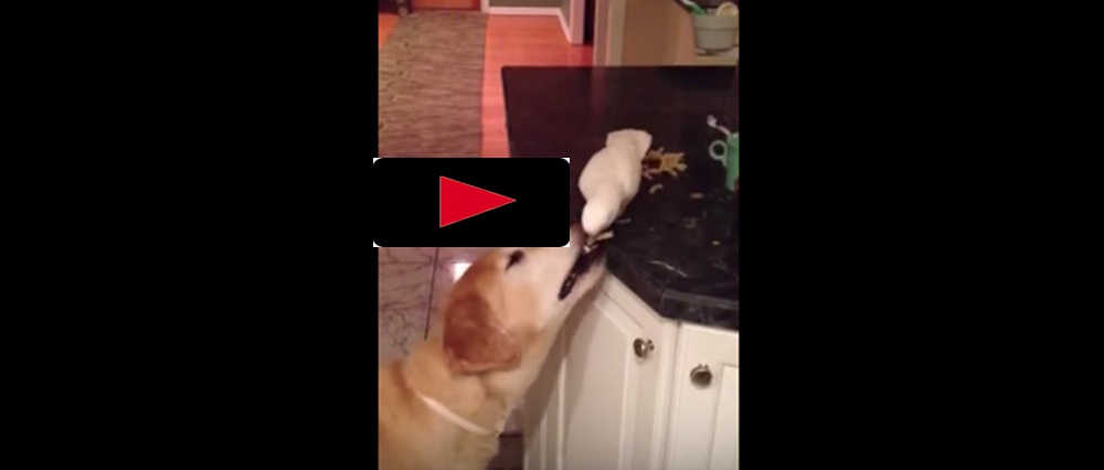 Lite spagetti, hunden?