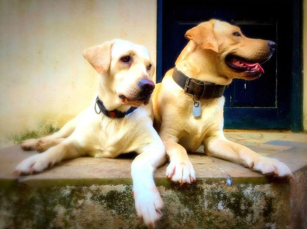 Wendy & Tyke.  Foto: Clinton Fernandes