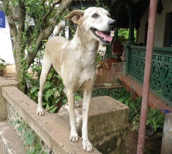 Nytt område - nya hundkompisar