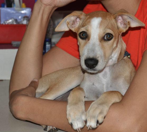 Indisk veterinär - inte riktigt som hemma...