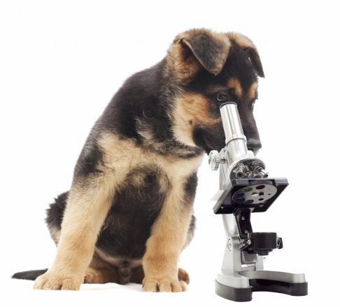 10 coola vetenskapliga fakta om hundar