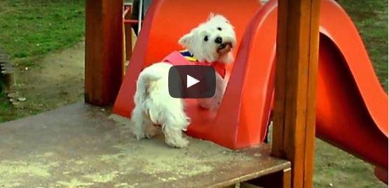 Hundkul i lekparken