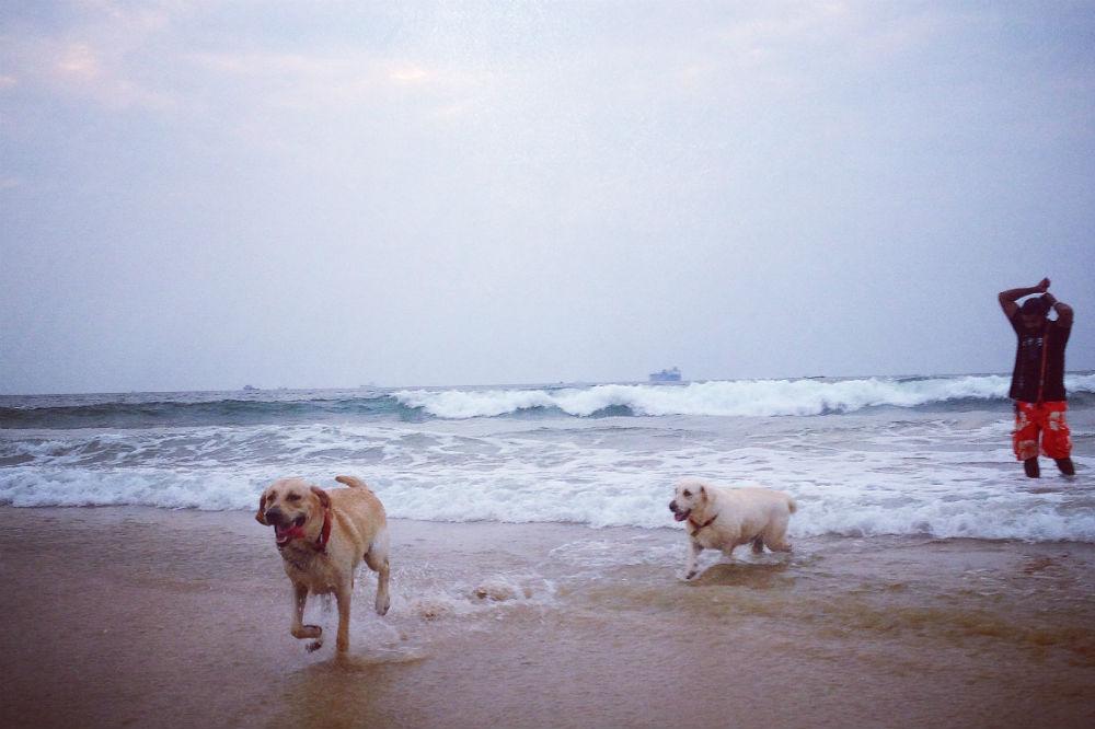 Så här ser lyckliga hundar ut!