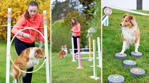 DIY: Bygg en egen agilitybana