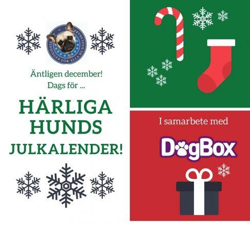 Nu kommer årets Julkalender 2015!