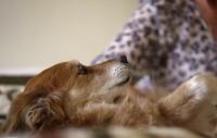 Film: Hundarnas sjätte sinne
