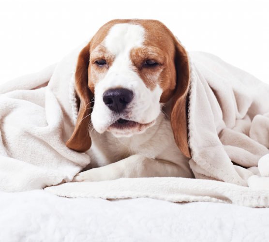 7 tecken på att din hund inte mår bra