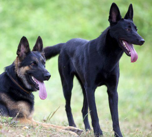 Behöver hunden hundkompisar?