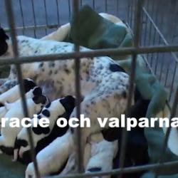 FILM: Gracie & valparna