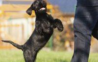 Hjälp, min hund hoppar!